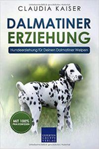 Dalmatiner Erziehung