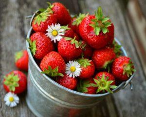 Dürfen Hunde Erdbeeren fressen