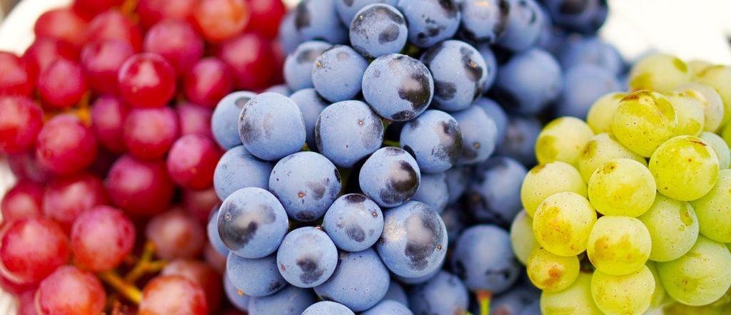 Dürfen Hunde Weintrauben essen
