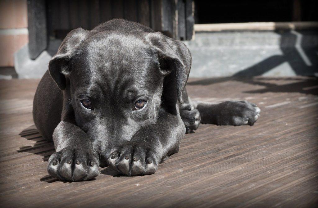 Giardien beim Hund