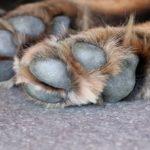 Grannen in der Hundepfote