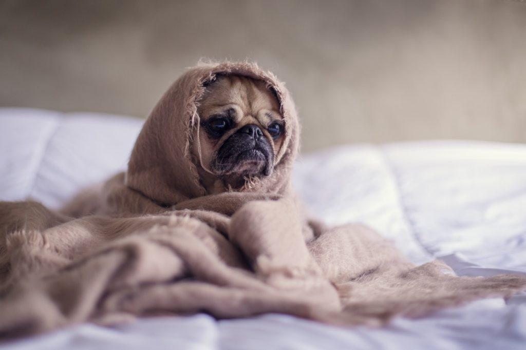 Hund nach Durchfall