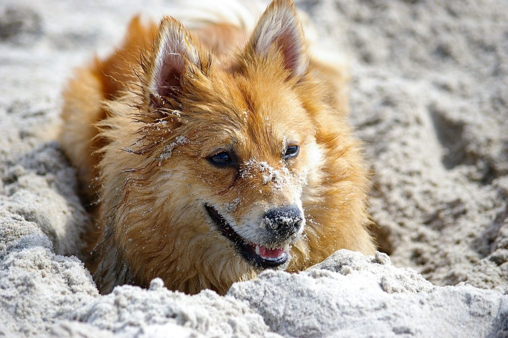 Hundesteuer_Hundesteuermarke