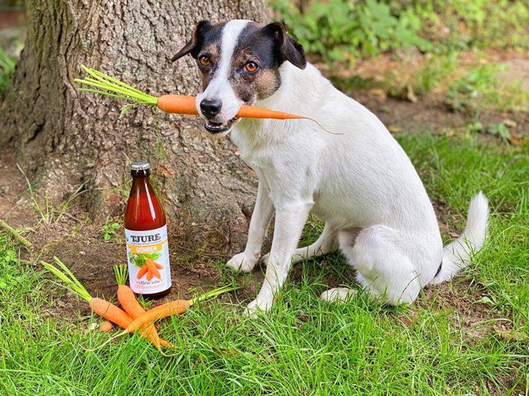 Morosche Karottensuppe in Flaschen