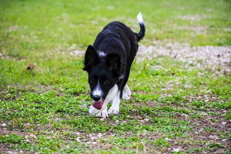 Weintrauben Hund