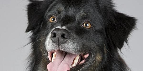 Hundefutter_Nassfutter