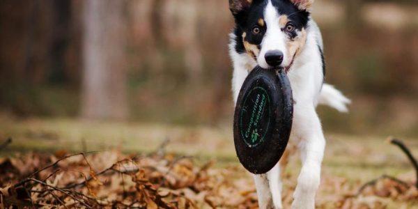 Hundespielzeug Frisbee