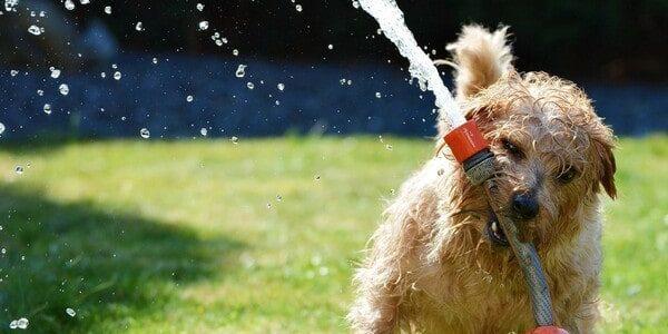 Hund spielt mit Wasser