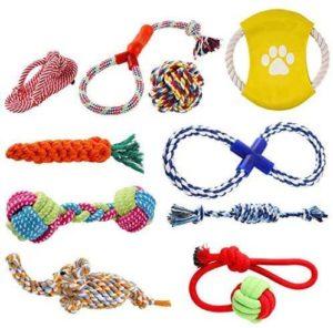 pedy Hundespielzeug Set, geeignet für kleine und mittelgroße Hunde